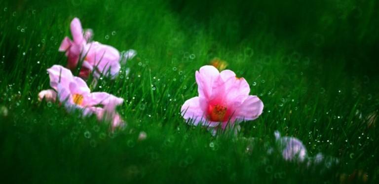 落红与芳菲 花开花落 感谢有你