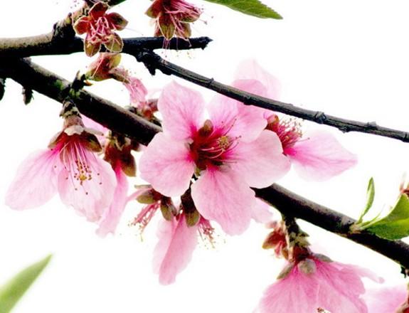 春来榆生亿万钱 人间四月芳菲尽